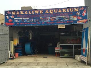 Toko Ikan Hias Makaliwe Grogol Jakarta Barat