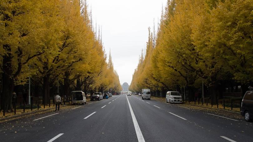 Golden Alley of Gaien Ginkgo Biloba in Tokyo