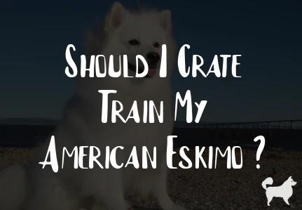 Should I Crate Train My American Eskimo ?