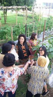 Ibu Rita Panen Sayur di Kebun Mini TP-PKK