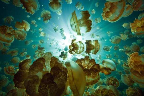 Mergulho no Lago das Águas-vivas - Qual é o real perigo?