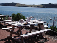 Tourists deliberately left their food waste on the table to feed the birds - Houhora Harbor, NZ