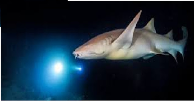 Sharks Navigate Using Earth's Magnetic Fields Like a Compass, New Research Shows