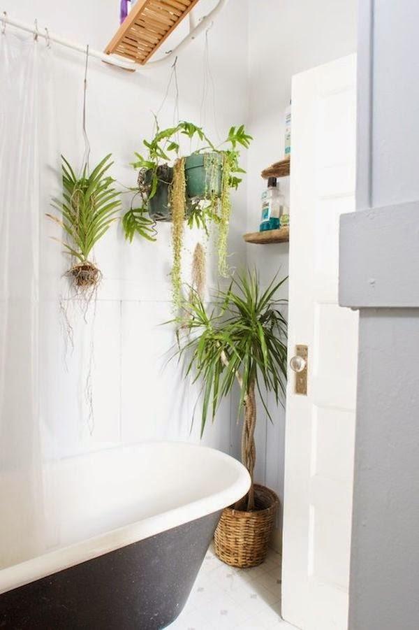 Las mejores plantas para el cuarto de ba o ba os y muebles - Plantas en el bano ...