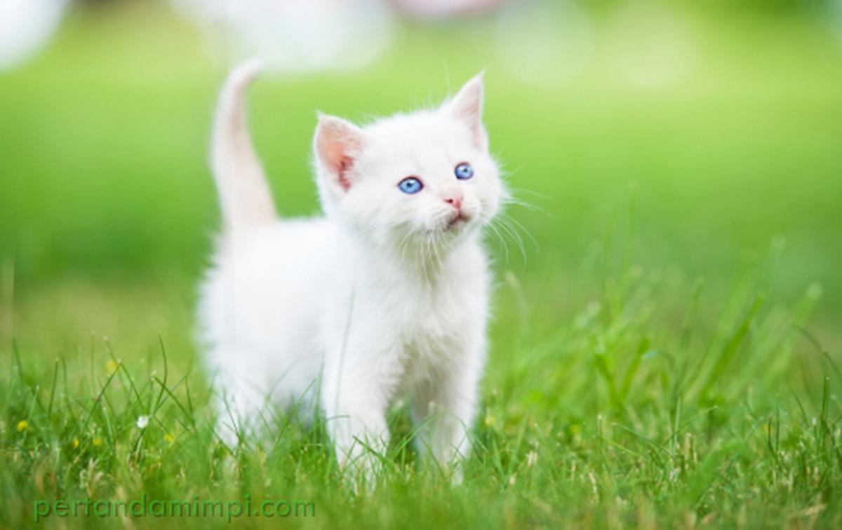 13 Arti Mimpi Melihat Kucing Ramalan Primbon Jawa