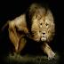 Lions Den Kodi Addon Repo