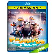 Pajaritos a volar (2019) BRRip 720p Latino