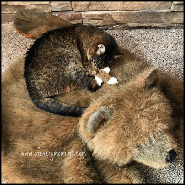 Cat lying curled up on a (fake) bear rug