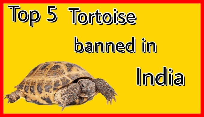Top 5 illegal tortoise in india