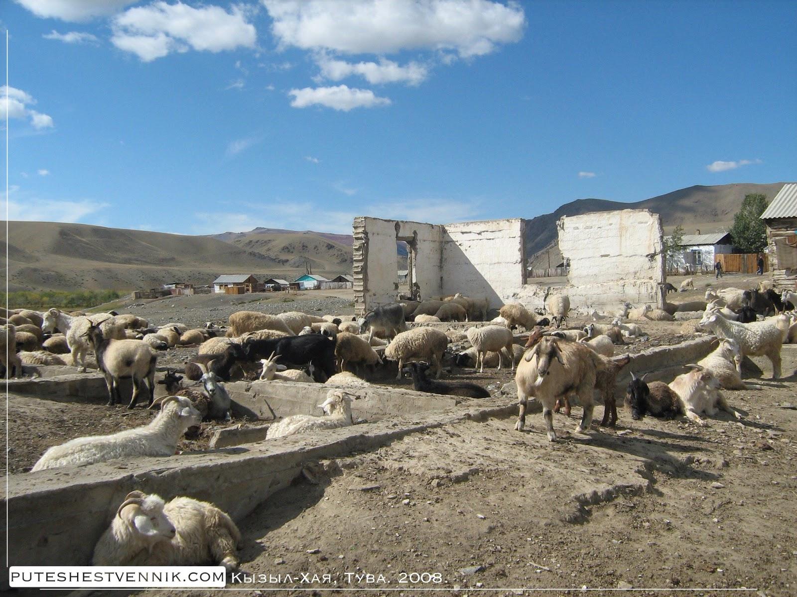 Козы на развалинах в деревне Кызыл-Хая