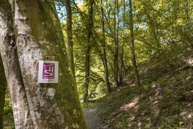 Traumschleife Dünnbach-Pfad - Saar-Hunsrück-Steig  Premiumwanderweg Kastellaun  Wandern im Hunsrück 08