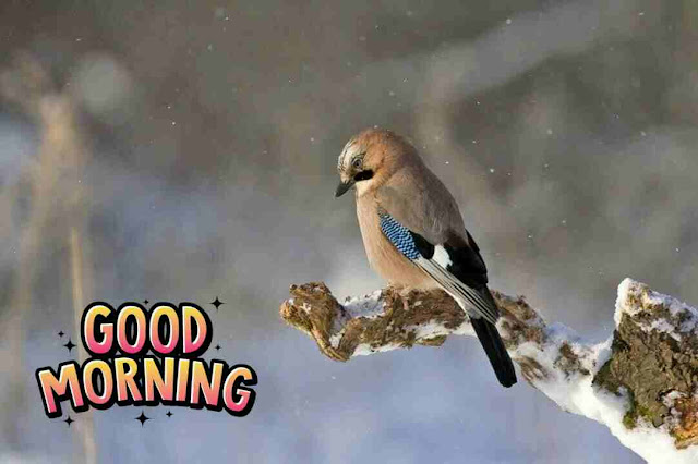 Awesome  good morning image of cute nature bird