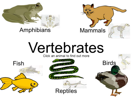 Klasifikasi Hewan Vertebrata
