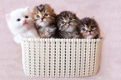 http://lalellecats.blogspot.com/p/blog-page_6.html