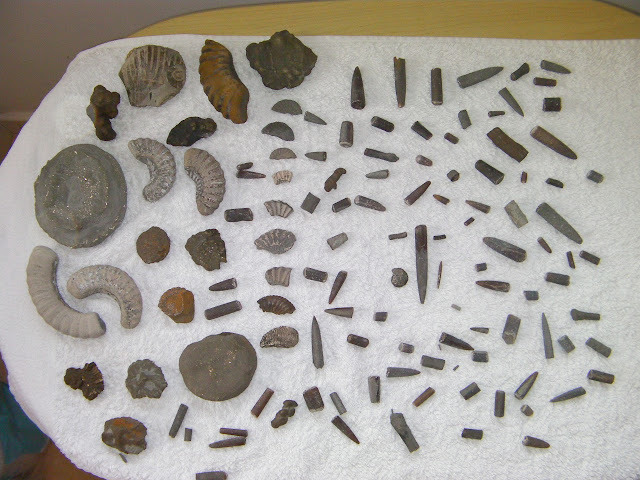 fossil collection ammonites, belemnites and crinoids jurassic coast