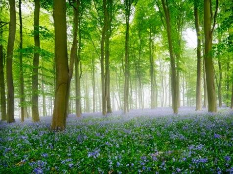 5 Hutan paling indah di seluruh dunia  Temukan Yang