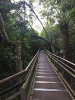 sendero de la selva misionera