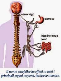 Nervo Vago: quali sintomi provoca? | Come curare tale ...