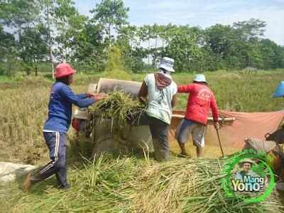 FOTO 3 : Perontokan Padi Trisakti