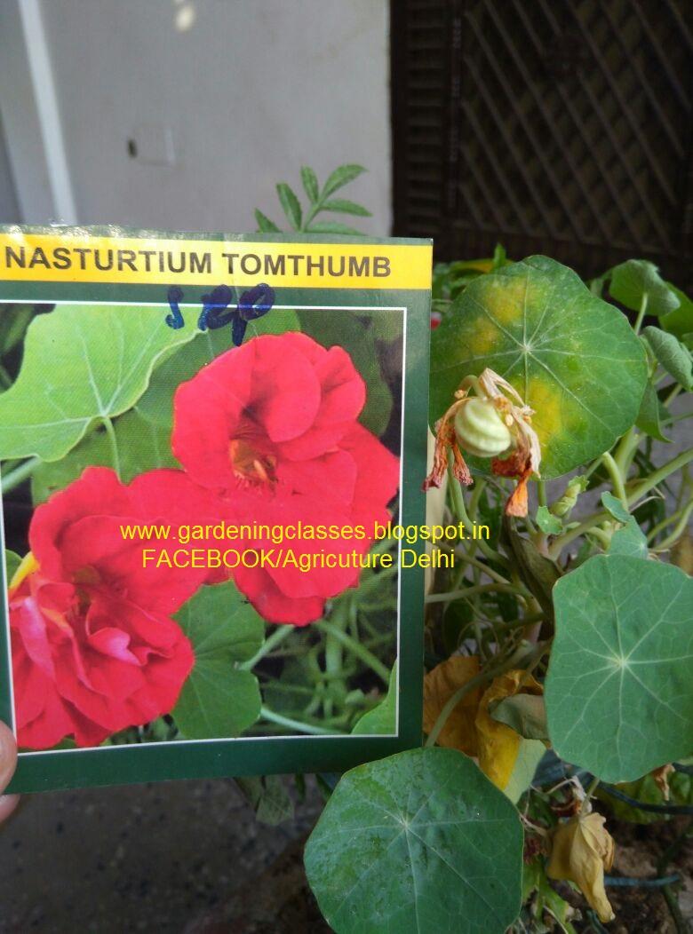 Somesh Jha Seasonal Flowers For Winter Gardening In Winter Season
