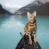 Μία γάτα ταξιδιάρα...