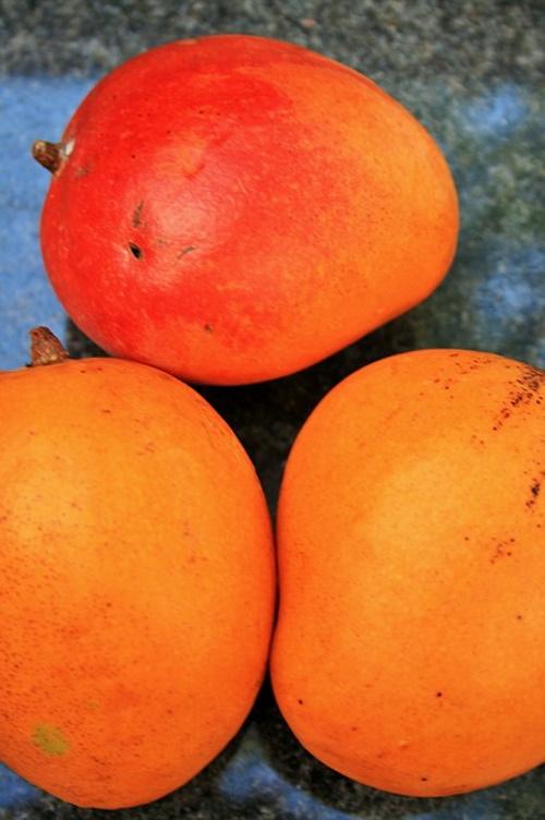 Manga, laranja, frutas tropicais. #PraCegoVer