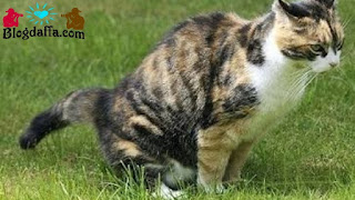 Cara menghilangkan bau kotoran kucing dengan mudah