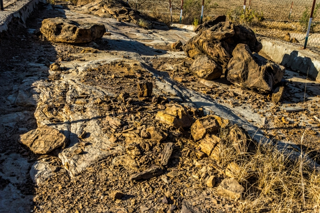 Another broken fossil at Dholavira Fossil Park