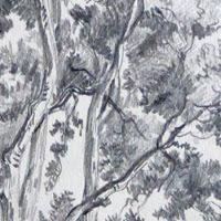 Jouons avec les dessins d'arbres de Leo Drouyn