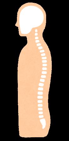 背骨のイラスト(横から)