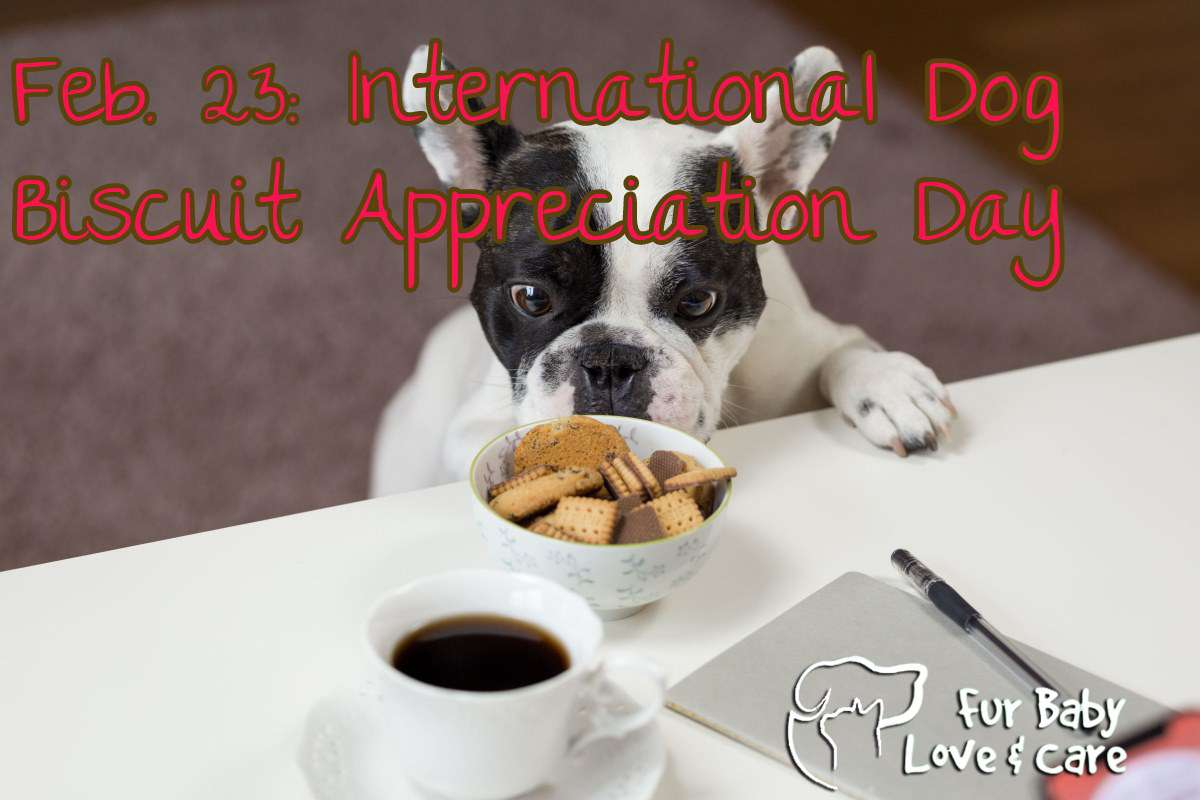 International Dog Biscuit Appreciation Day Wishes Awesome Picture