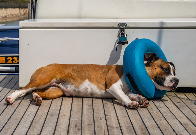 Photo of Ruby sunbathing on Ravensdale's aft deck