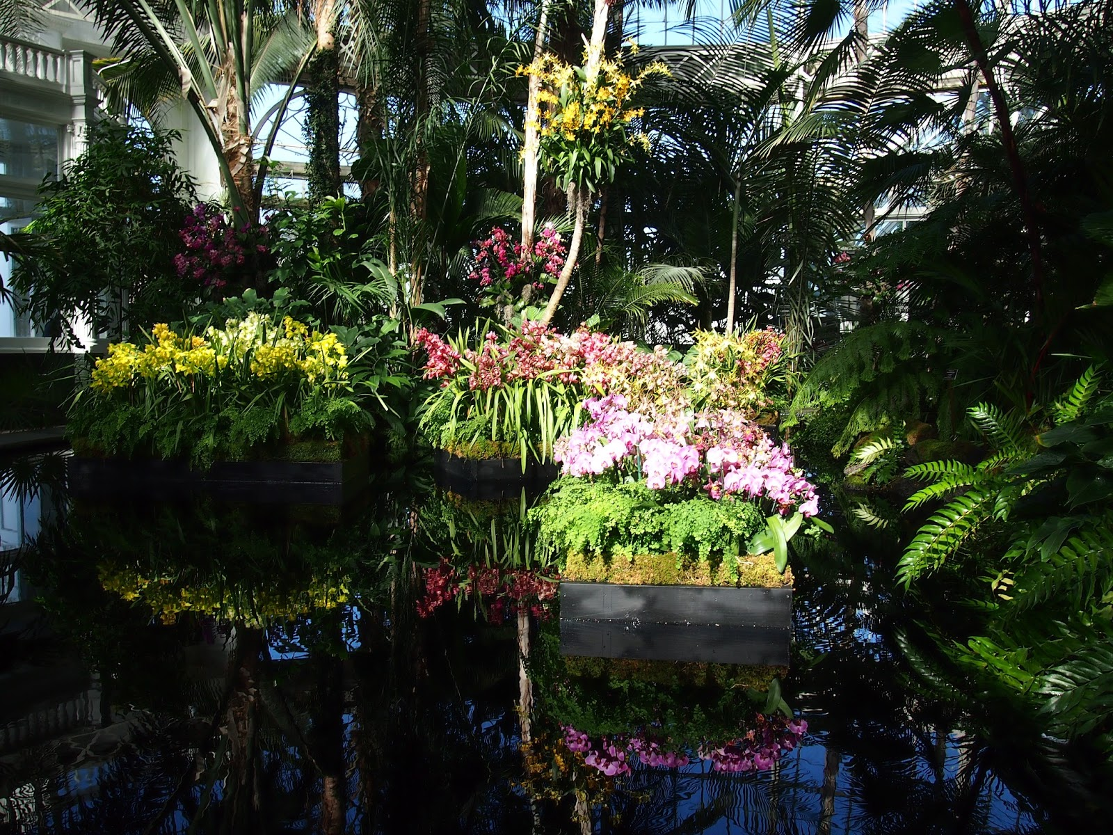 One picture a day from new york city the orchid show new - Restaurants near bronx botanical garden ...