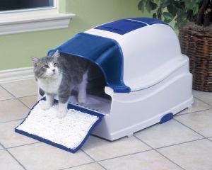 Tips Melatih Kucing Agar Buang Kotoran Tidak Sembarangan