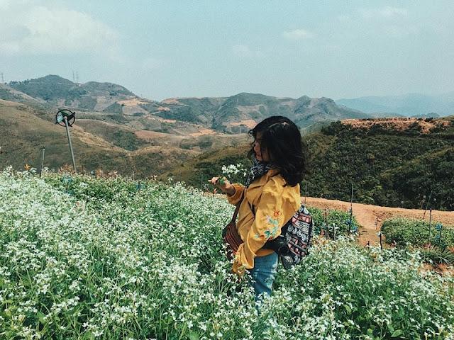 Đồi hoa tím biếc tựa trời Âu thu hút giới trẻ Việt check-in 7