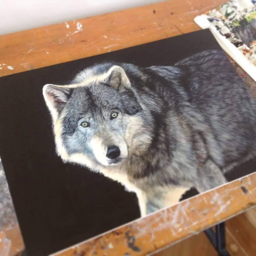 05-Grey-Wolf-Amber-Tyldesley-www-designstack-co