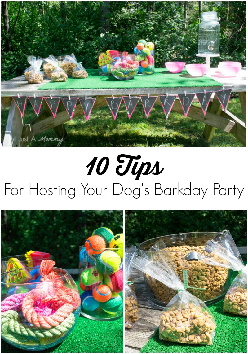 Celebrate Your Four-Legged Friend!