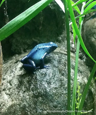 The National Aquarium in Baltimore Maryland at Inner Harbor