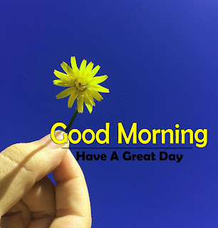 New Good Morning 4k Full HD Images Download For Daily%2B2
