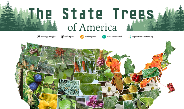 The State Trees of America
