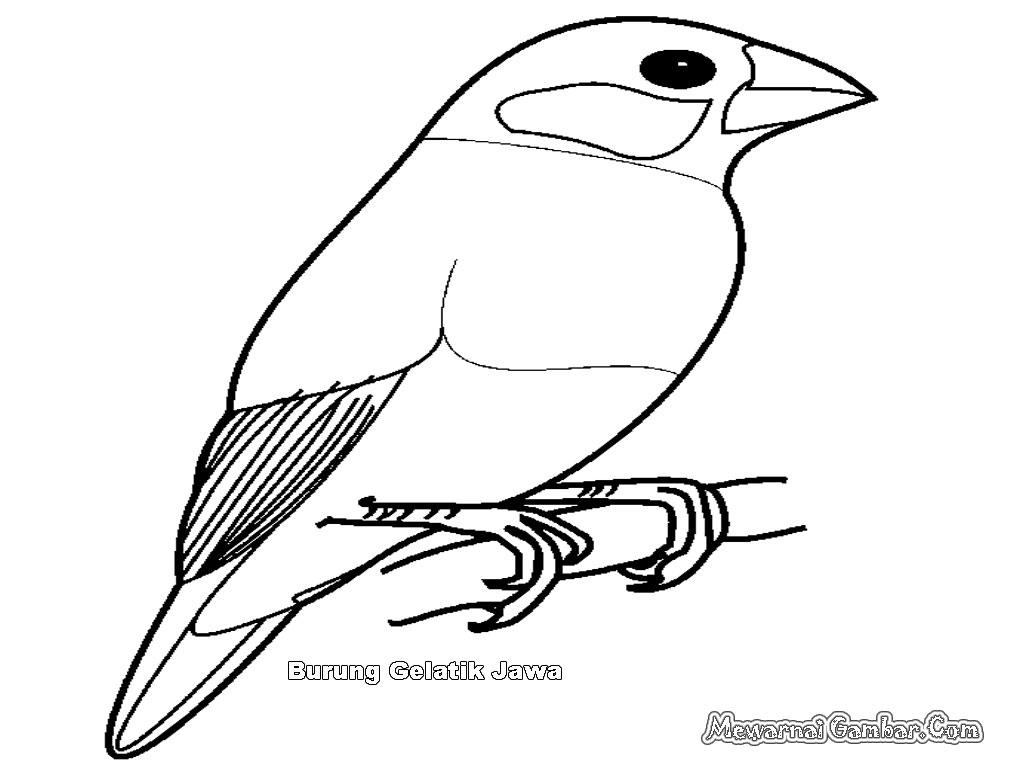 Mewarnai Gambar Burung Gelatik Mewarnai Gambar