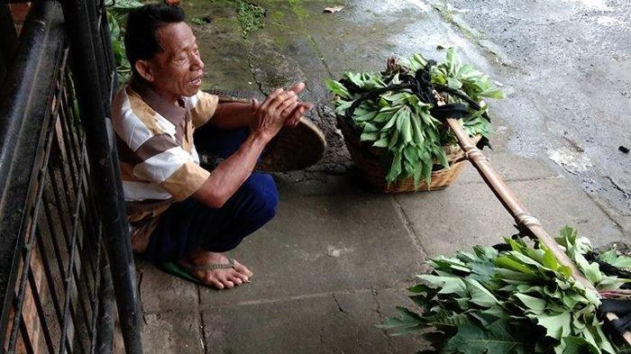 Kisah Pedagang Daun Singkong Umroh