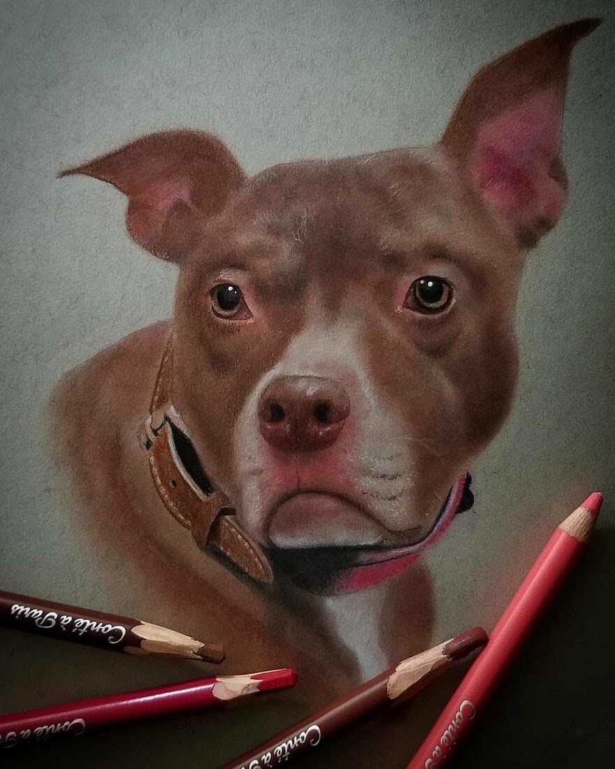 04-Dog-Rene-Lopez-Animal-Pencil-and-Pastel-Portrait-Drawings-www-designstack-co