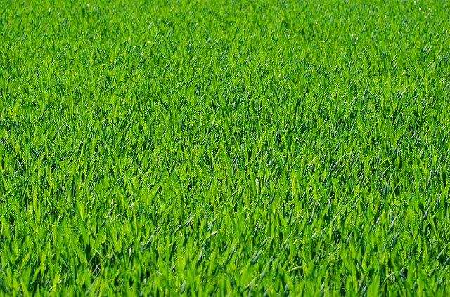 how to plant a new lawn over an old lawn