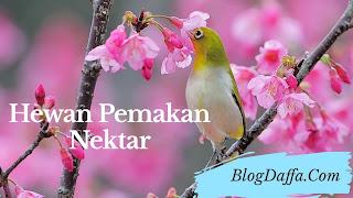 Hewan pemakan nektar