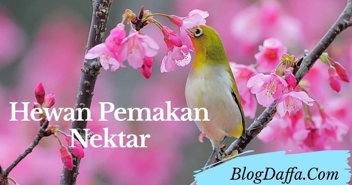 Inilah Beberapa Jenis Hewan Pemakan Nektar Bunga Yang Jarang Diketahui Blogdaffa Com