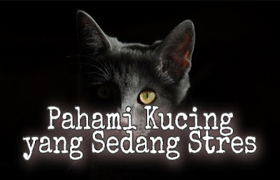 Ciri kucing stres