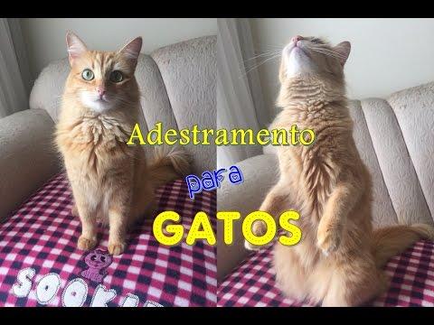 O Guia Do Gato Perfeito Como Adestrar um Gato [ COMPROVADO ! ]