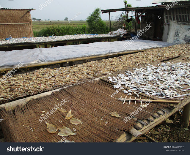 https://www.shutterstock.com/image-photo/traditional-drying-process-salted-fish-only-1880893837