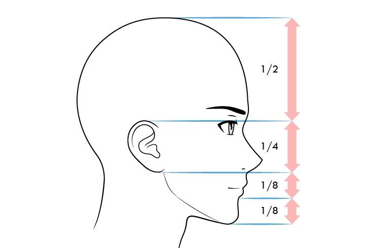Tampak samping proporsi wajah pria anime